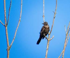 Backbird (?)...