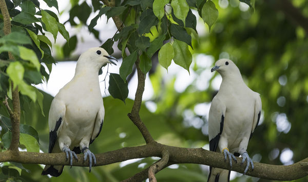 cute doves...