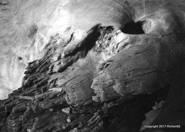 Closeup of rotting ocean driftwood - 1950...