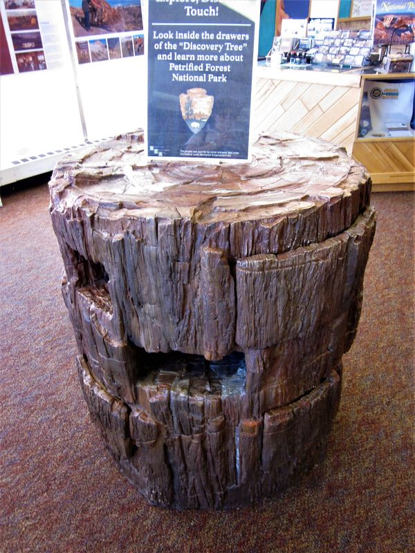 Petrified Wood from Petrified Forest...