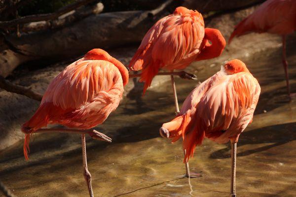Flamingos...