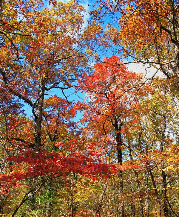 My Best Autumn Color Shot of 2018...