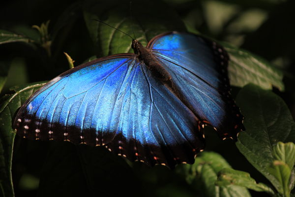 butterfly garden is always so peaceful getting alittle pricey but still worth the pictures - Uf Butterfly Garden