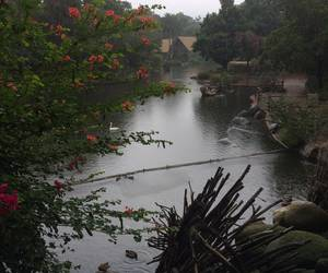 rainy day at the Safari Park SD...