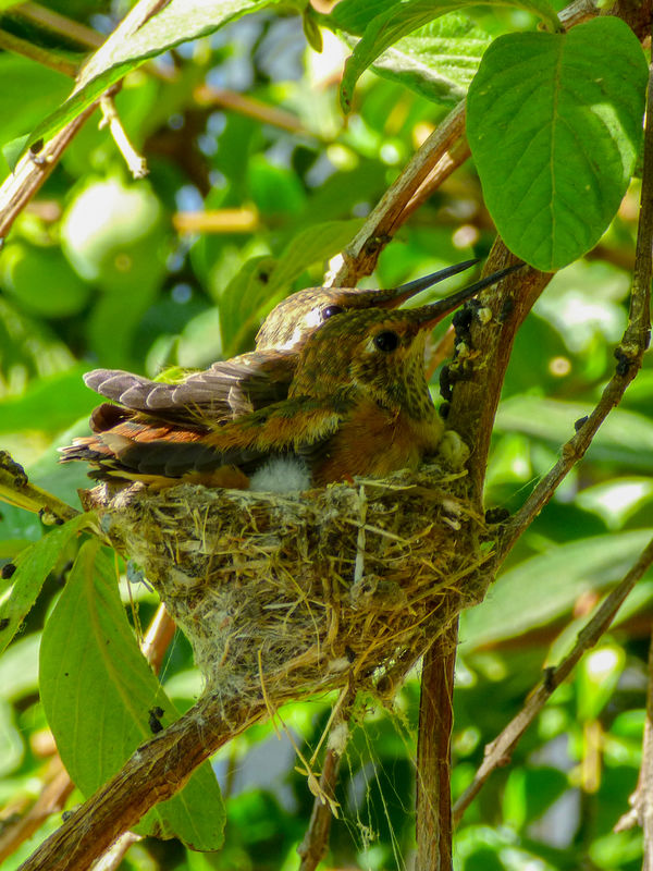 single mom empty nest