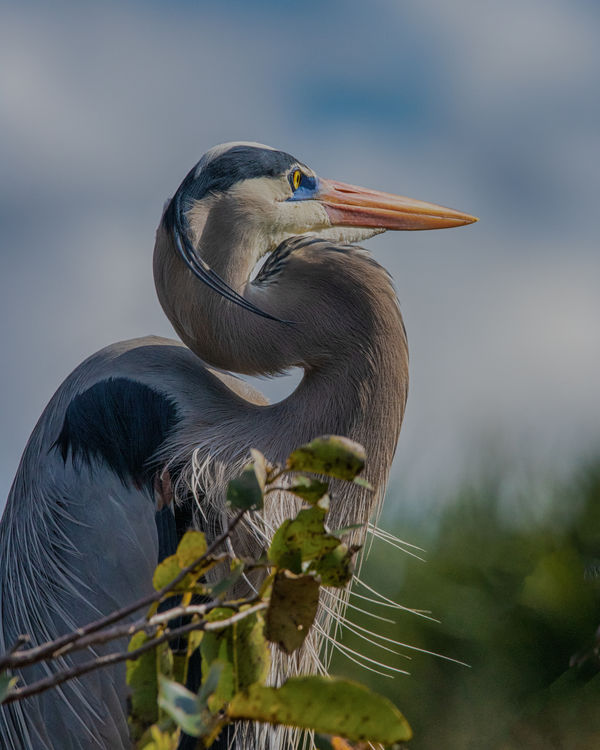 GBH f/11, 1/2000, ISO800...