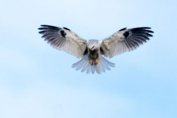 A Kiting Kite...