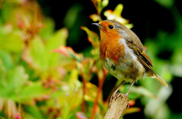 Robin 2...