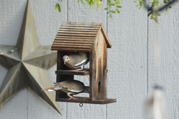 ...and some of my yard birds could have fit right ...