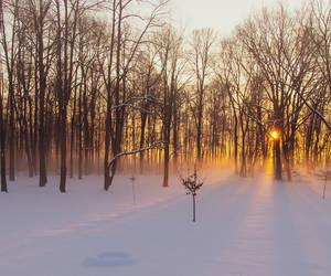 a foggy morning in my back yard...