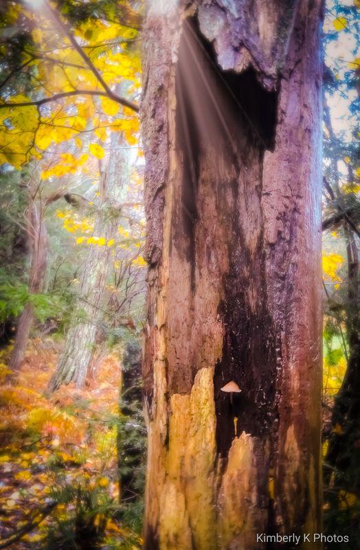 Mushroom in tree...