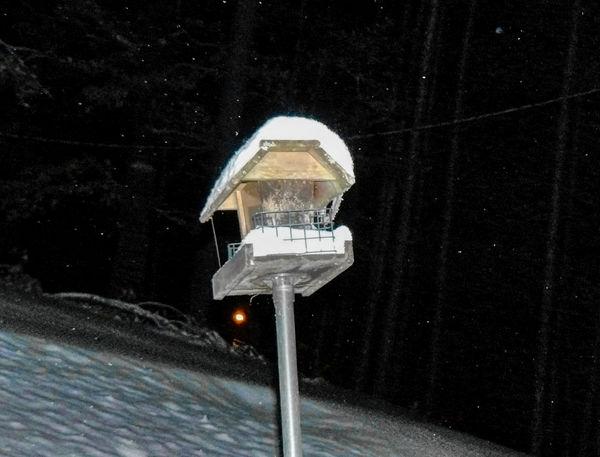 My Bird feeder.....