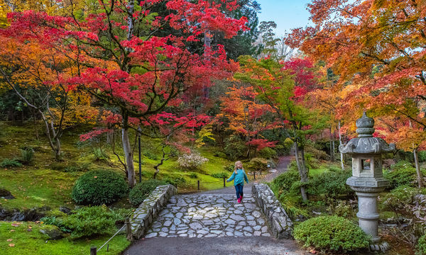 Japanese Garden - Washington Park Arboretum...
