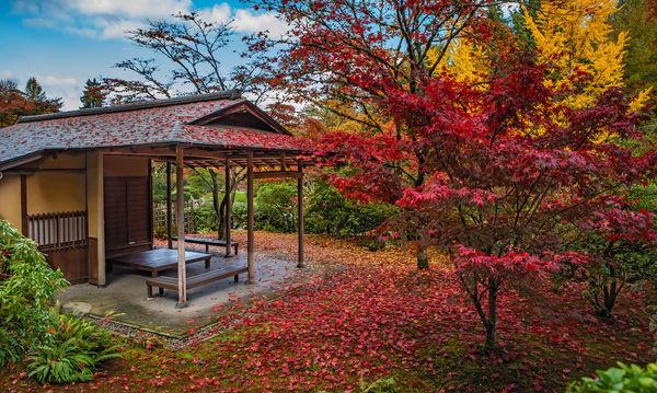 Tea House - Washington Park Arboretum...