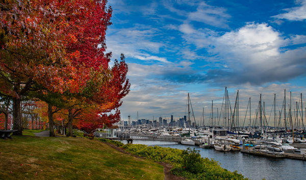 Seattle Marina - The city in the distance...