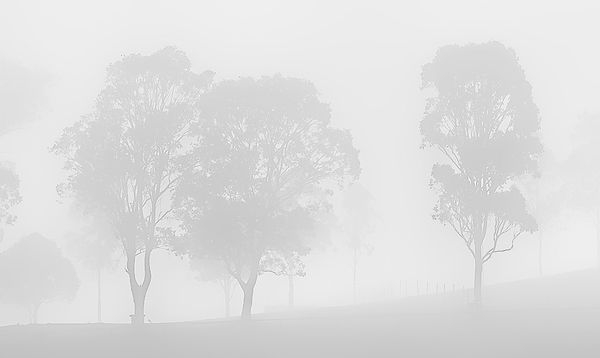 Foggy morning at a motor racing track, Sydney, Aus...