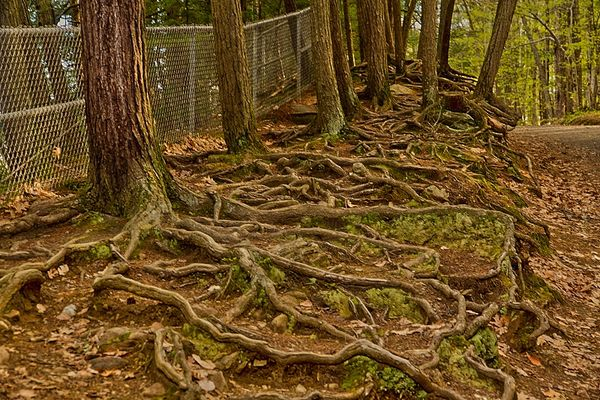 Geneologic trees, lots of roots...