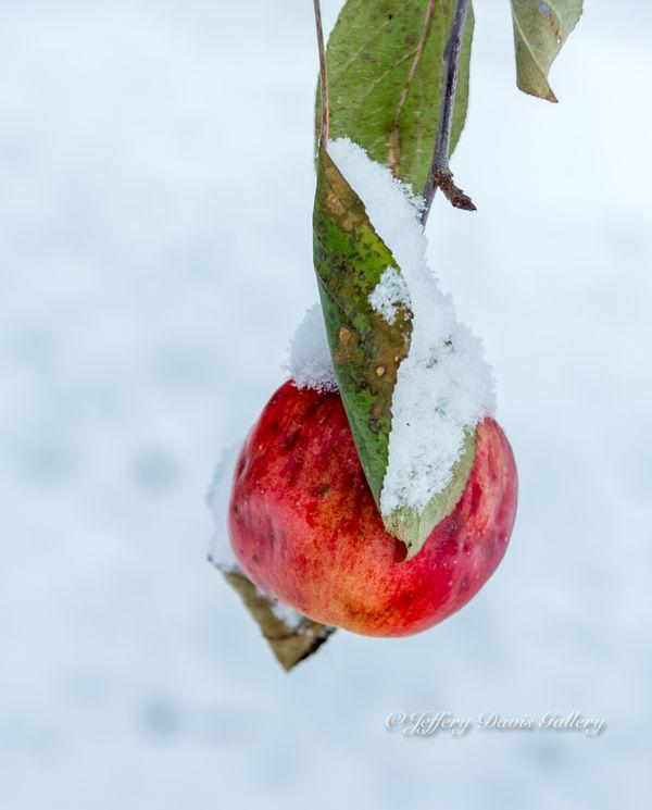 Last Apple...