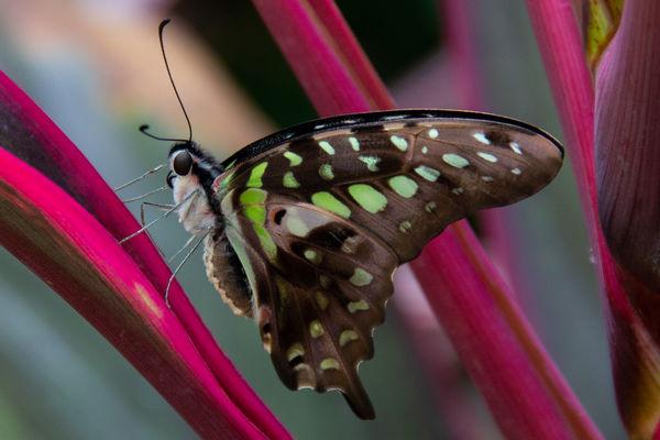 Best butterfly...