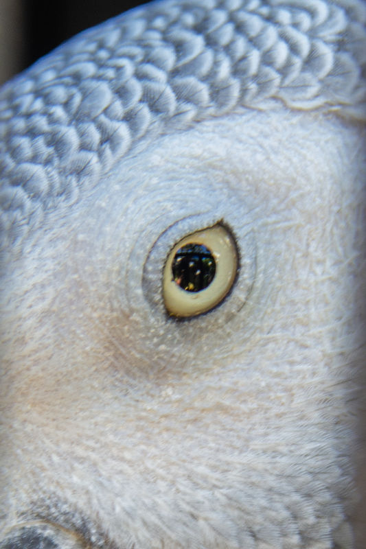 Best closeup without a macro lens...lol...