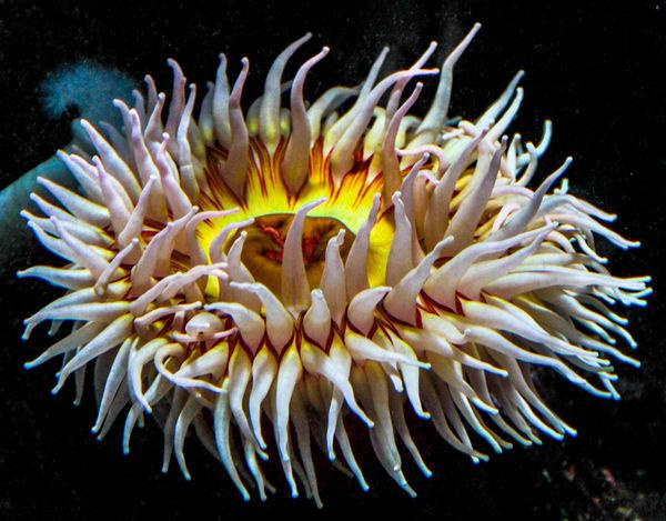 Best Sea anemone...