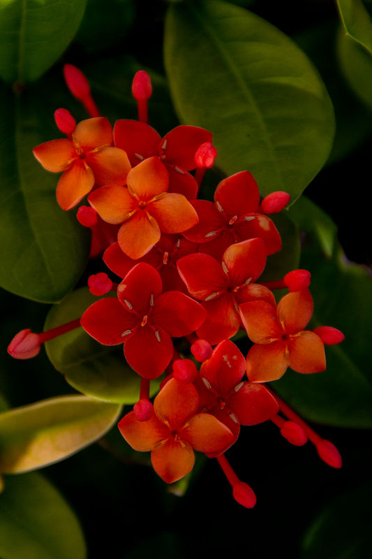Best flower...