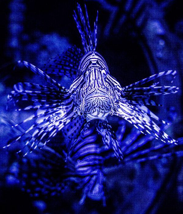 Best aquarium fish...