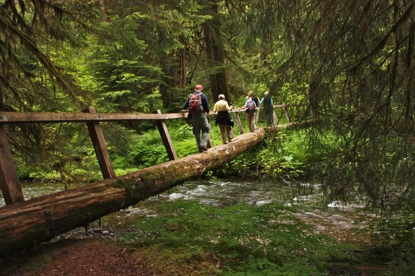 Olympic National Park Hiking Trail...