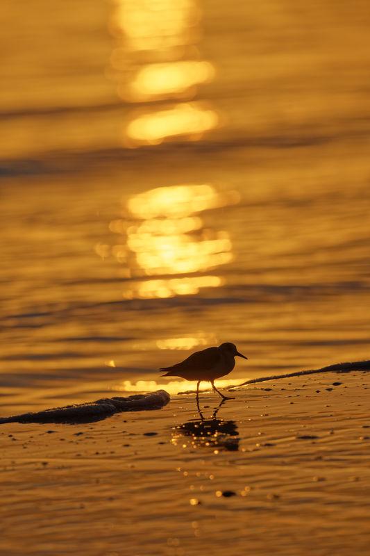 Sunset Stroll...