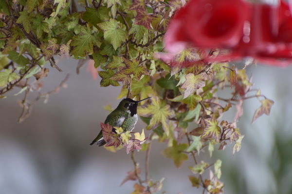 1/200 sec., f5.6, 300mm, ISO320 - flash too?...