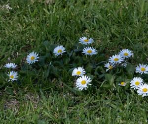 Pushing up daisies......