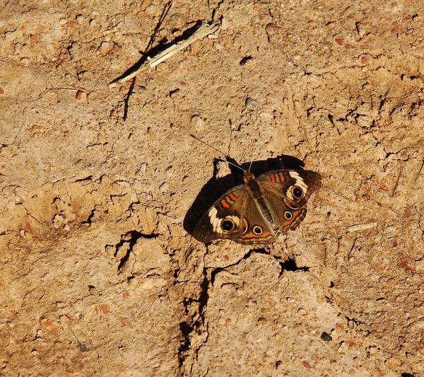 texture of the dirt, isolation butterfly versus th...