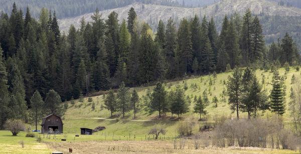 A peaceful, pastoral scene...