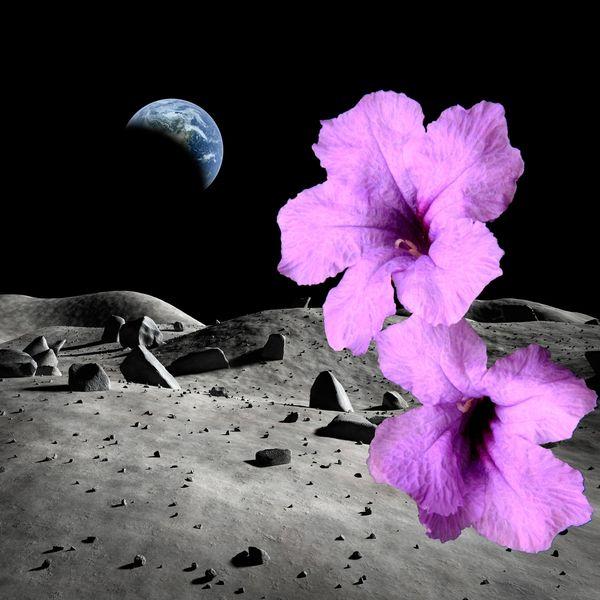 flowers on the moon? yep, in solitude......
