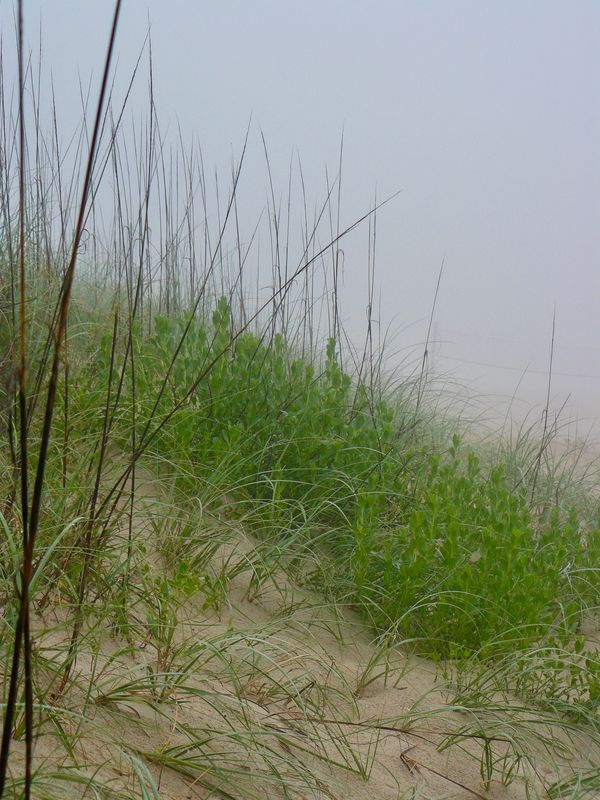 A foggy morning beach scene from the Outer Banks, ...