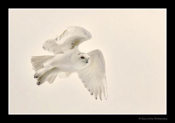 Male in flight...
