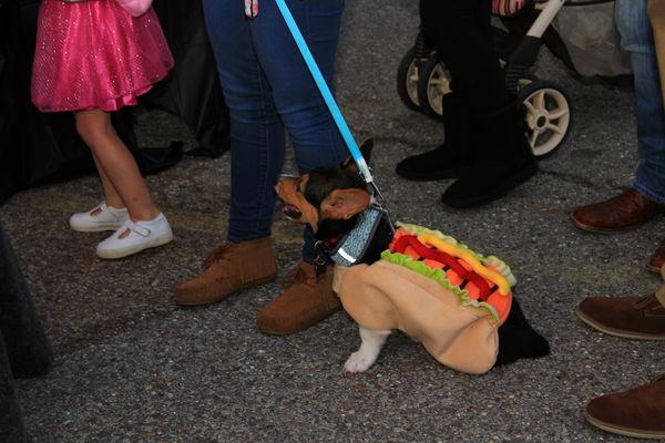 Dog in a Costume...