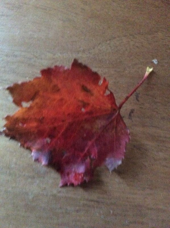 Red maple leaf...