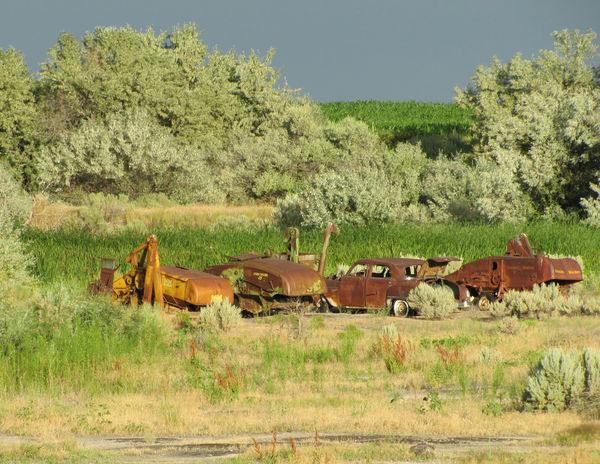 Rusty Cars...