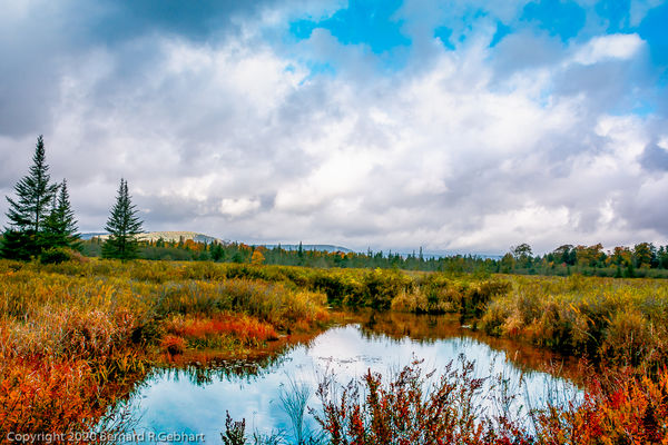 Autumn colors around a pond in the Canaan Valley W...