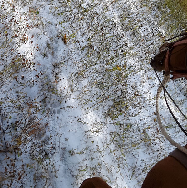 Lots of bear tracks on this trail this morning...