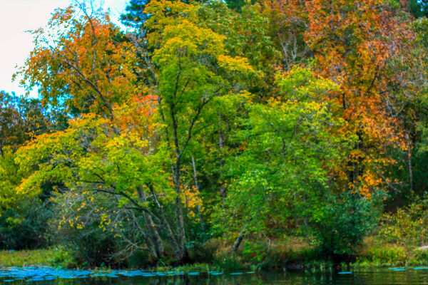 Cove Lake Fall of 2019...