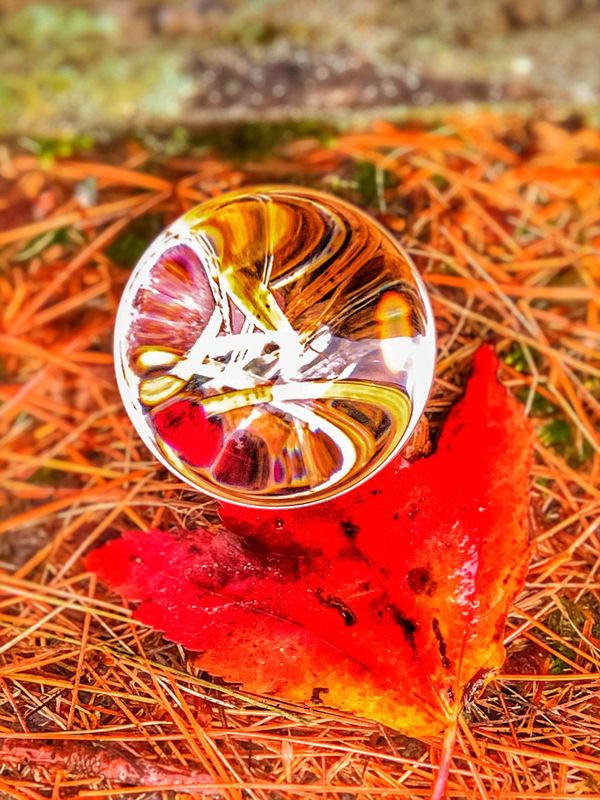 A leaf and needles trough a lens ball....