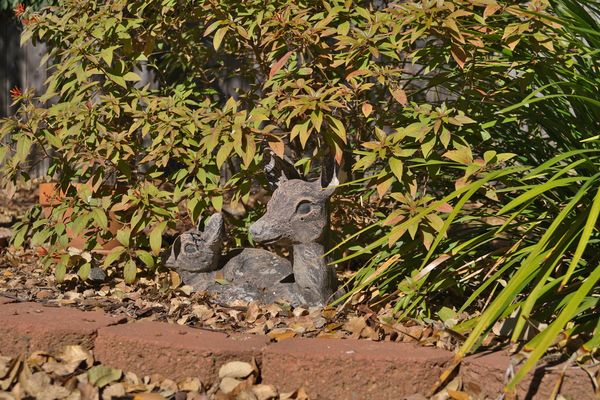 …. Outside deer.  But little or no bokeh!...