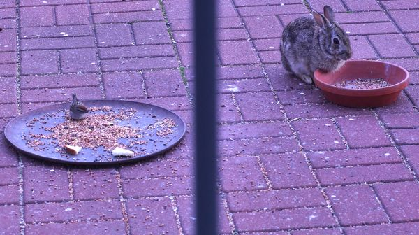 """The """"Odd Couple"""" on Dad's patio...."""