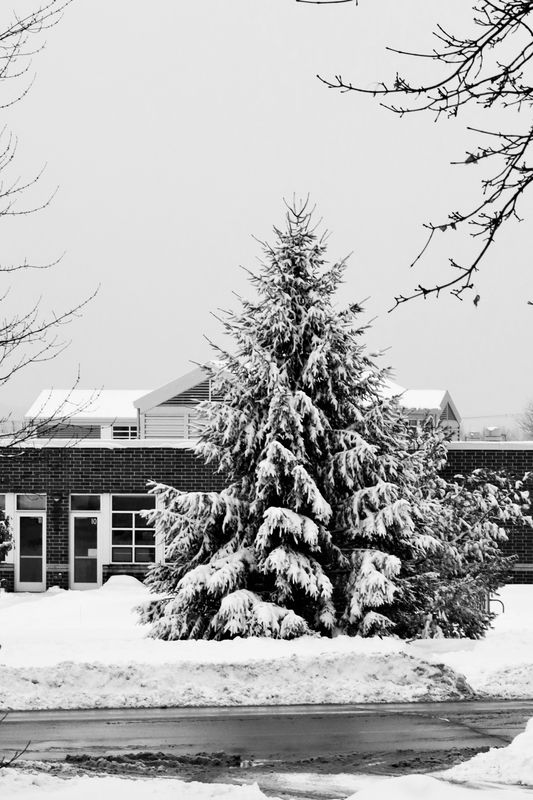 For winter sometimes B/W is the best...