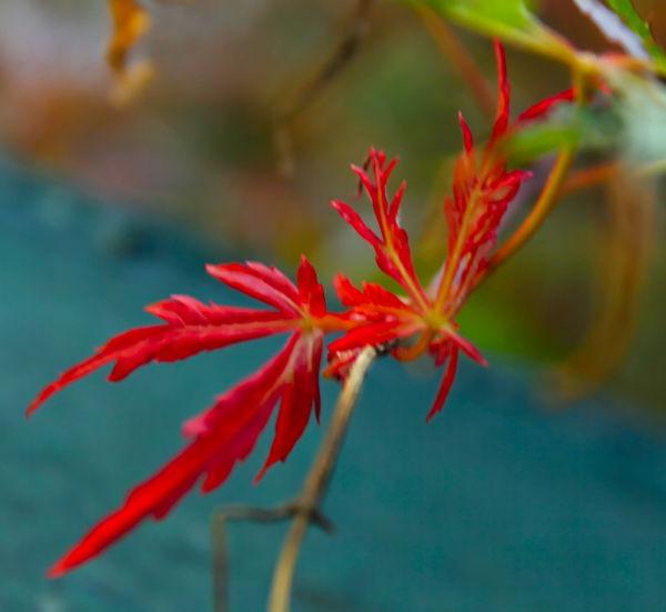 New Leaf...