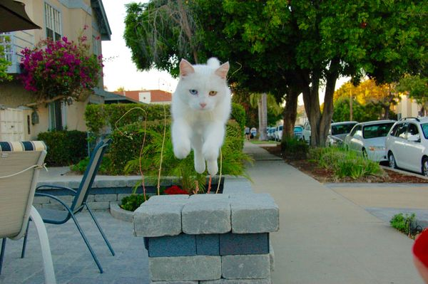 Our cat, Jewell, likes to leap...