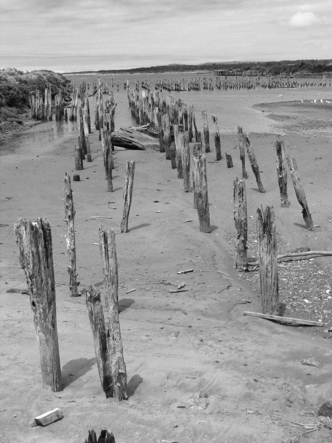 Ancient pilings, Oregon Coast...