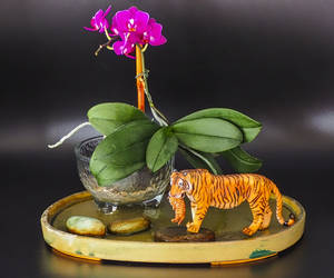 Orchid & Tiger...